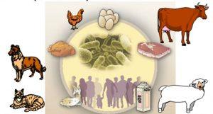 Hayvan Sağlığı Ürünleri & Veterinerlik Alanı Dezenfektanları